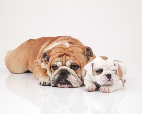 wohnmobile-erlangen-lustige-hunde